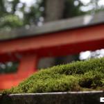Japon 2014 / Jour 11 . Hakone - 02