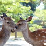 Japon 2014 / Jour 14 . Nara - 03