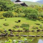 Japon 2014 / Jour 14 . Nara - 04