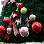 Disneyland 02 - 221109 - Noël - Sapin