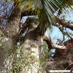 Sénégal 03 - 070310 - Hôtel Lookea Royal Saly
