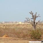 Sénégal 08 - 100310 - Brousse