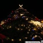 Disneyland 13 - 221109 - Noël - Sapin de nuit