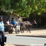 Sénégal 31 - 120310 - M Bour - Calèche