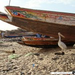 Sénégal 34 - 120310 - Port de pêche de M Bour - Pélican