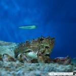 Aquarium de la Rochelle 01 - 080411