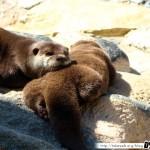 Zoo de la Palmyre 01 - 070411