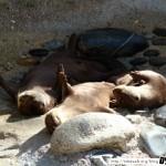 Zoo de la Palmyre 02 - 070411