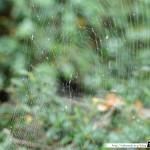 Araignée de la coulée verte (sans araignée) 03