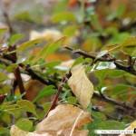 Araignée de la coulée verte (sans araignée) 09