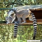 Zoo de la Palmyre 04 - 070411