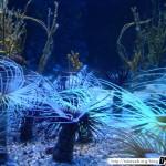 Aquarium de la Rochelle 05 - 080411