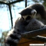 Zoo de la Palmyre 05 - 070411