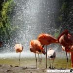 Zoo de la Palmyre 06 - 070411