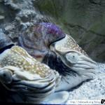 Aquarium de la Rochelle 07 - 080411