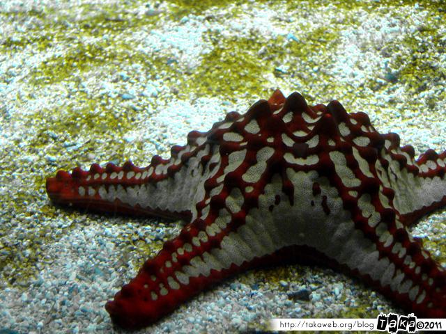 Aquarium de la Rochelle 08 - 080411