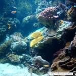 Aquarium de la Rochelle 09 - 080411