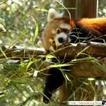 Zoo de la Palmyre 09 - 070411