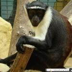 Zoo de la Palmyre 10 - 070411