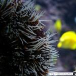Aquarium de la Rochelle 11 - 080411