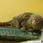 Zoo de la Palmyre 11 - 070411
