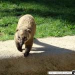Zoo de la Palmyre 12 - 070411