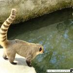 Zoo de la Palmyre 13 - 070411