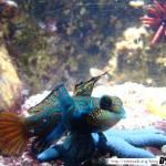 Aquarium de la Rochelle 15 - 080411