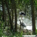 Zoo de la Palmyre 15 - 070411