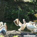 Zoo de la Palmyre 16 - 070411