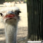 Zoo de la Palmyre 17 - 070411