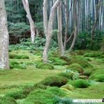 Japon Jour 12 – Kyoto 18
