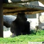 Zoo de la Palmyre 18 - 070411