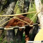 Zoo de la Palmyre 19 - 070411