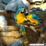 Zoo de la Palmyre 21 - 070411