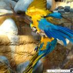 Zoo de la Palmyre 22 - 070411